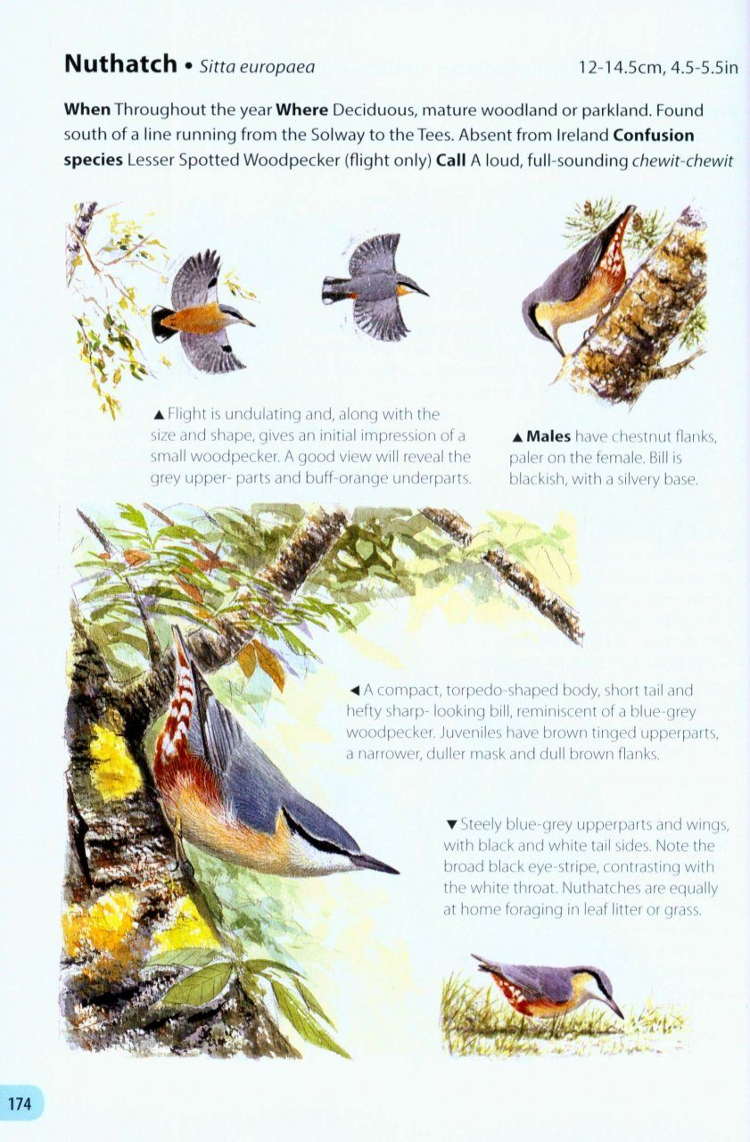 Britain's Birds: An Identification Guide to the Birds of ...