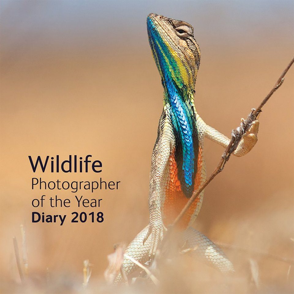 Wildlife Photographer Of The Year Desk Diary 2018 The