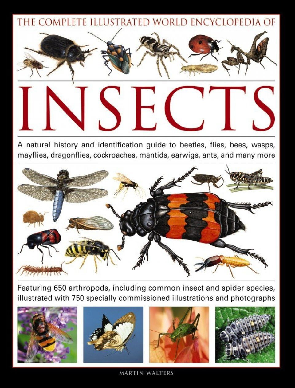 an introduction to bees and wasps from the order hymernoptera Defining the order this vast assemblage of insects is second only to coleoptera wasps this group of hymenoptera includes some familiar types, such as hornets, spider wasps bees the most familiar bee, of course.