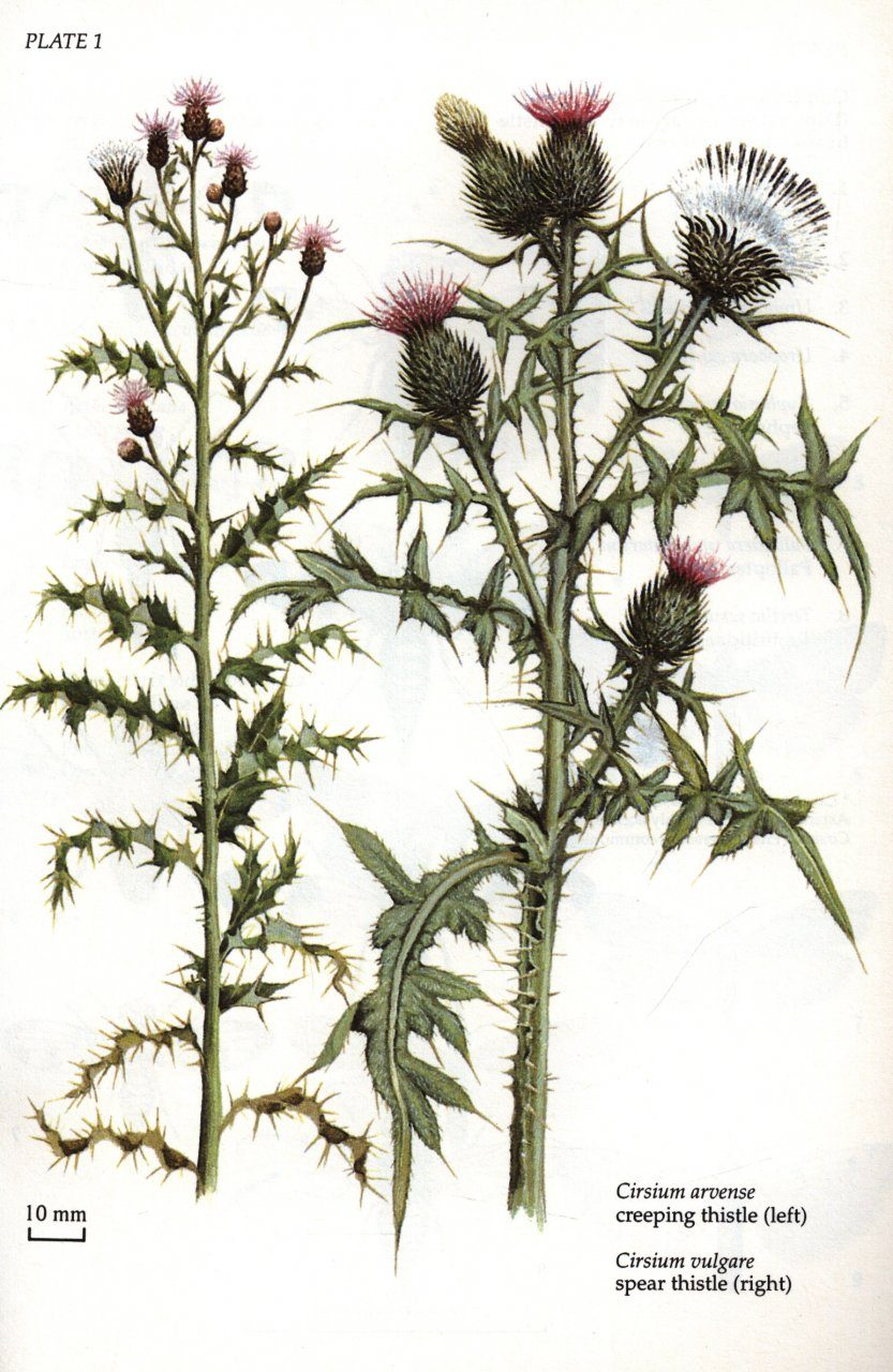 Insects and Thistles: ... Anthony Hopkins