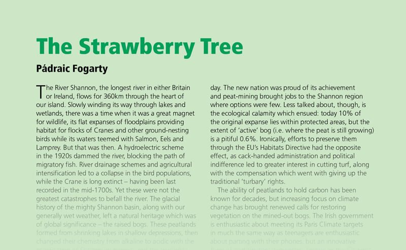 The Strawberry Tree