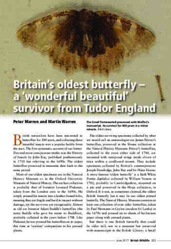 Britain's oldest butterfly – a 'wonderful beautiful' survivor from Tudor England