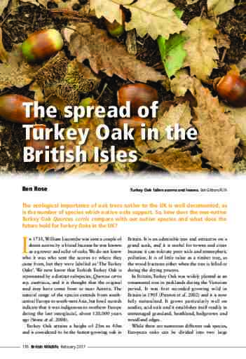 The spread of Turkey Oak in the British Isles