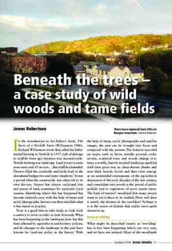 Beneath the trees –  a case study of wild woods and tame fields