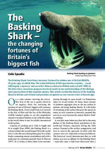 The Basking Shark –  the changing fortunes of Britain's biggest fish