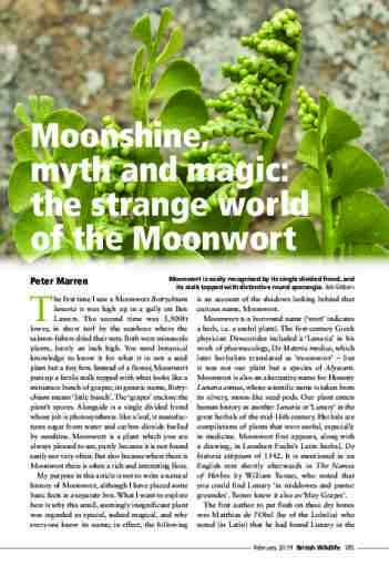 Moonshine, myth and magic: the strange world of the Moonwort