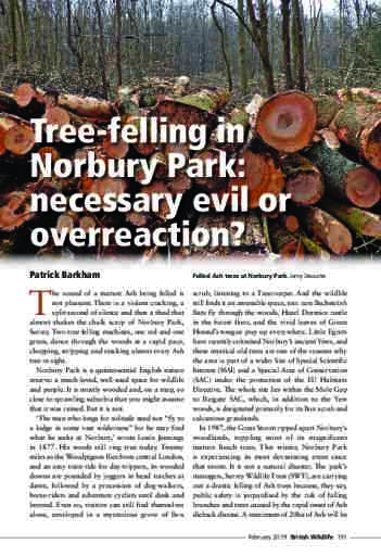 Tree-felling in Norbury Park: necessary evil or overreaction?