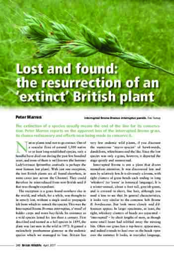 Lost and found: the resurrection of an 'extinct' British plant