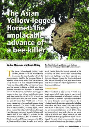 The Asian Yellow-legged Hornet: the implacable advance of a bee-killer