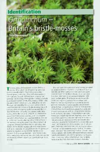 Identification: <i>Orthotrichum</i> – Britain's bristle-mosses