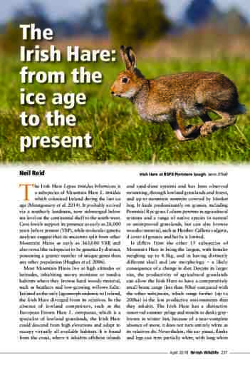 The Irish Hare: from the ice age to the present