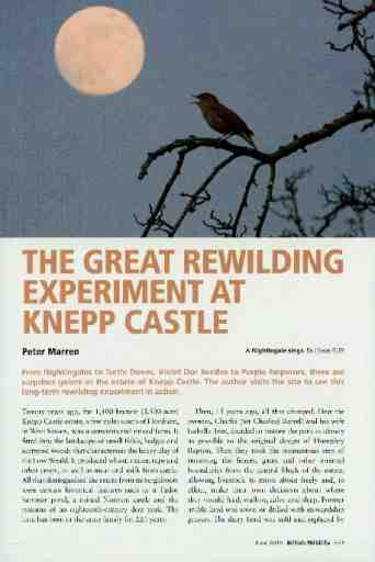 The great rewilding experiment at Knepp Castle