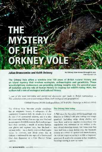 The mystery of the Orkney Vole