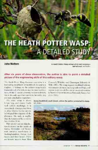 The Heath Potter Wasp: a detailed study