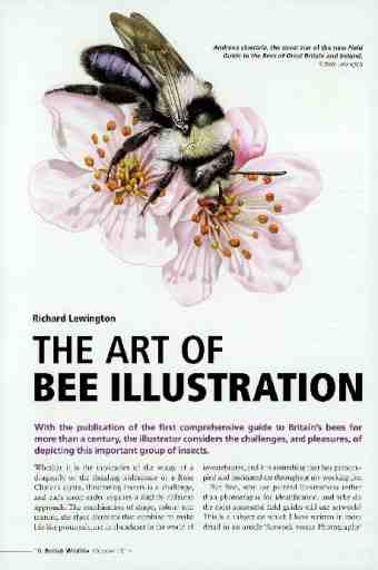 The art of bee illustration
