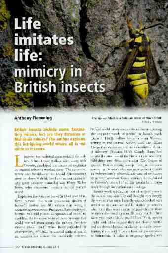 Life imitates life: mimicry in British insects