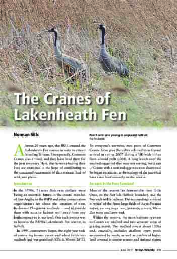 The Cranes of Lakenheath Fen