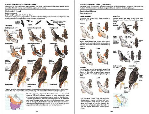The sibley guide to birds: second edition initial review.