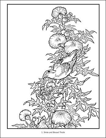 Hokusai: Birds, Flowers, and Nature Coloring Book: Katsushika ...