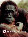 Orangutans: Wizards of the Rain Forest