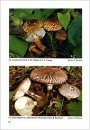 Fungi non Delineati 11: Interesting Macromycetes Found in the Czech and Slovak Republics