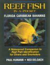 Reef Fish In-A-Pocket Waterproof Mini-Books: Florida, Caribbean, Bahamas