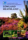 A Practical Guide to the Restoration and Management of Lowland Heathland