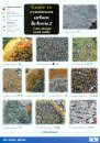 Guide to Common Urban Lichens 2 (on Stone and Soil)