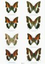 Butterflies of the World, Part 22: Nymphalidae X: Charaxes I