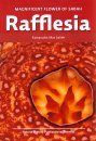 Rafflesia: Magnificent Flower of Sabah