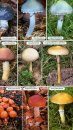 Collins Complete Guide to British Mushrooms and Toadstools