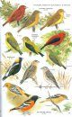 The Handbook of Bird Identification