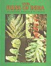 The Ferns of India