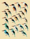 Handbook of the Birds of the World, Volume 6: Mousebirds to Hornbills