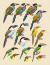 Handbook of the Birds of the World, Volume 7: Jacamars to Woodpeckers