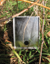 Longworth Small Mammal Trap with Shrew Hole