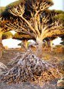 The Lost World of Socotra