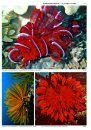 World Atlas of Marine Fauna