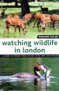 Watching Wildlife in London