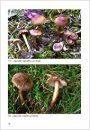 Fungi non Delineati 47: Especies Nuevas e Interesantes del Genero - Inocybe (1) [New and Interesting Species of the Genus - Inocybe (1)]