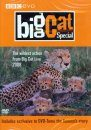 Big Cat Special (Region 2 & 4)