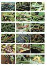 The Colour Identification Guide to the Caterpillars of the British Isles