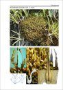 Bildatlas der Moose Deutschlands [Photographic Atlas of German Mosses], Fascicle 1