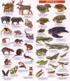 Costa Rica Wildlife Guide: Mammals, Birds, Reptiles, Amphibians, Butterflies [English / Spanish]