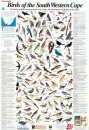 Newman's Birds of the South Western Cape - Poster