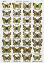 The Genus Colias Fabricius, 1807