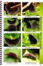Butterflies of Central America, Volume 2: Lycaenida & Riodinidae: The Hairstreaks and Metalmarks