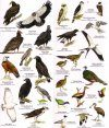 Belize: Birds