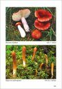 Fungi non Delineati 63-64: Funghi Rari, Critici o Interessanti dalla Finlandia [Rare, Endangered and Interesting Mushrooms from Finland]