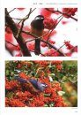 Field Guide to the Birds of China (3-Volume Set) [Chinese]